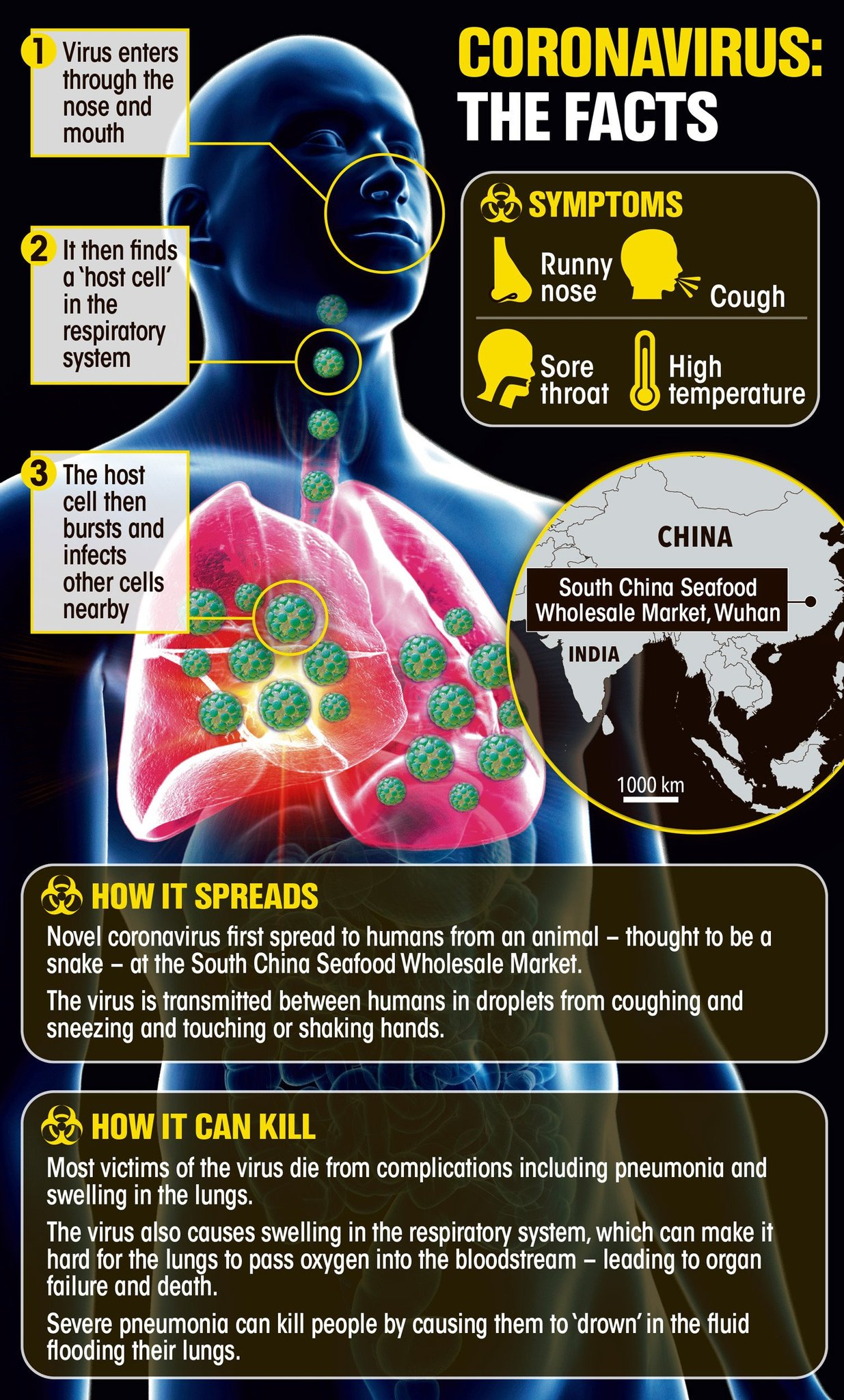 Wuhan Corona Virus Health Impact